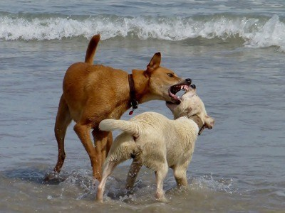 Dogs Play Biting