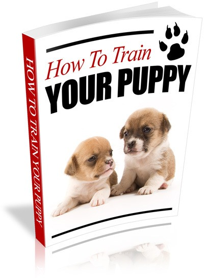How to Train Your Puppy Cover