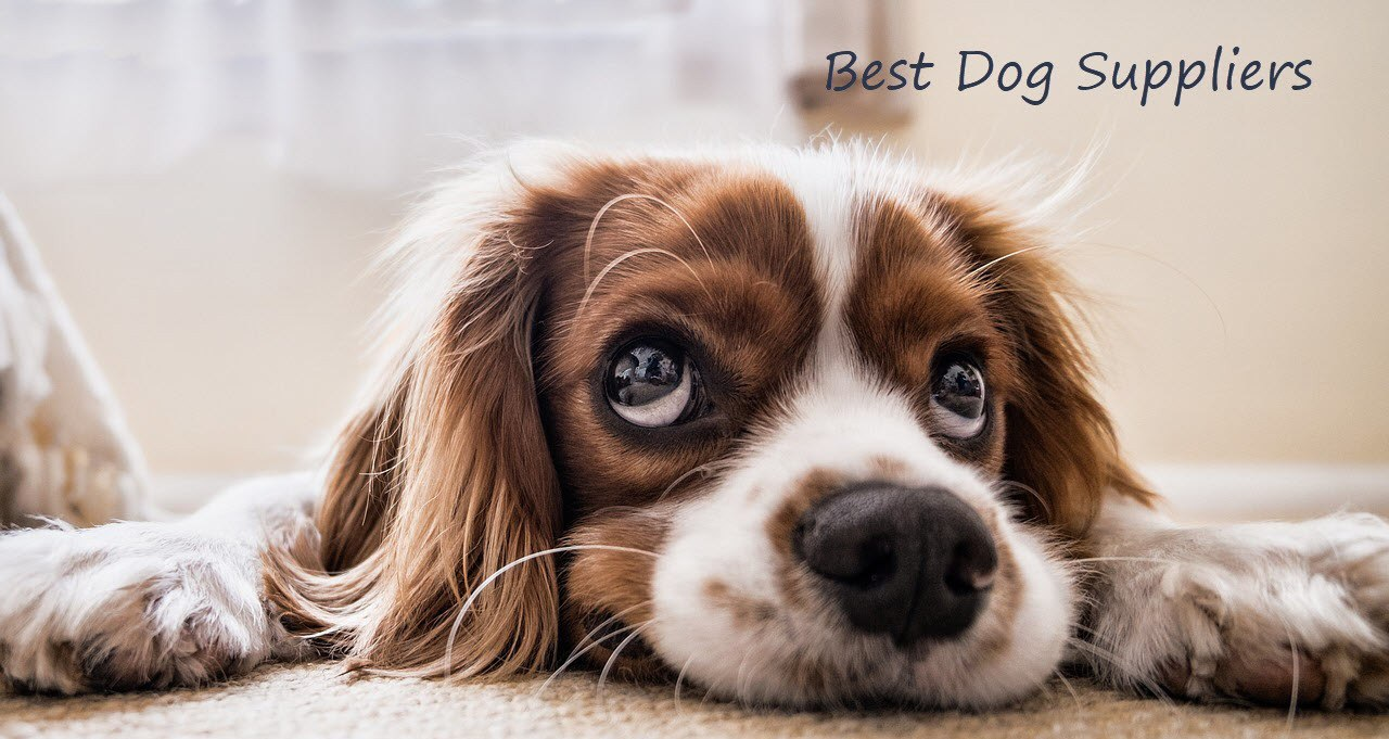 Best Dog Suppliers Banner Logo 1