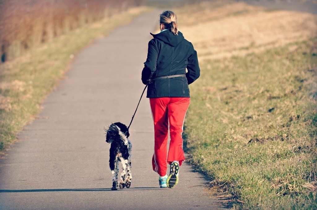 Jogging with Your Dog