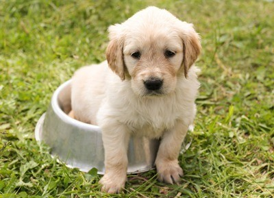 Train Your Puppy Soon and Often 400